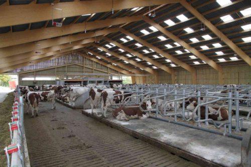 bâtiment bois lamellé collé vaches laitières