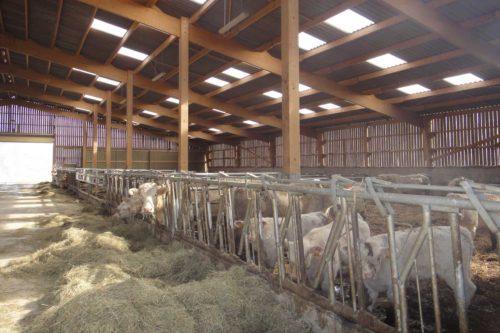 bâtiment vaches allaitantes charpente bois lamellé collé