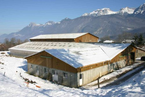 bâtiment vaches laitières bois