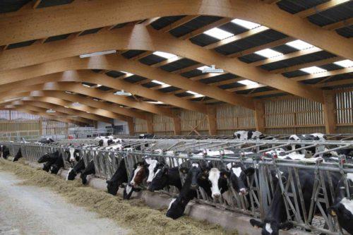 bâtiment vaches laitières charpente bois lamellé collé