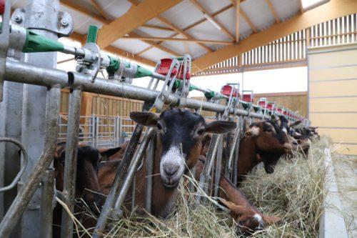 bâtiment chèvres journée portes ouvertes en Bourgogne
