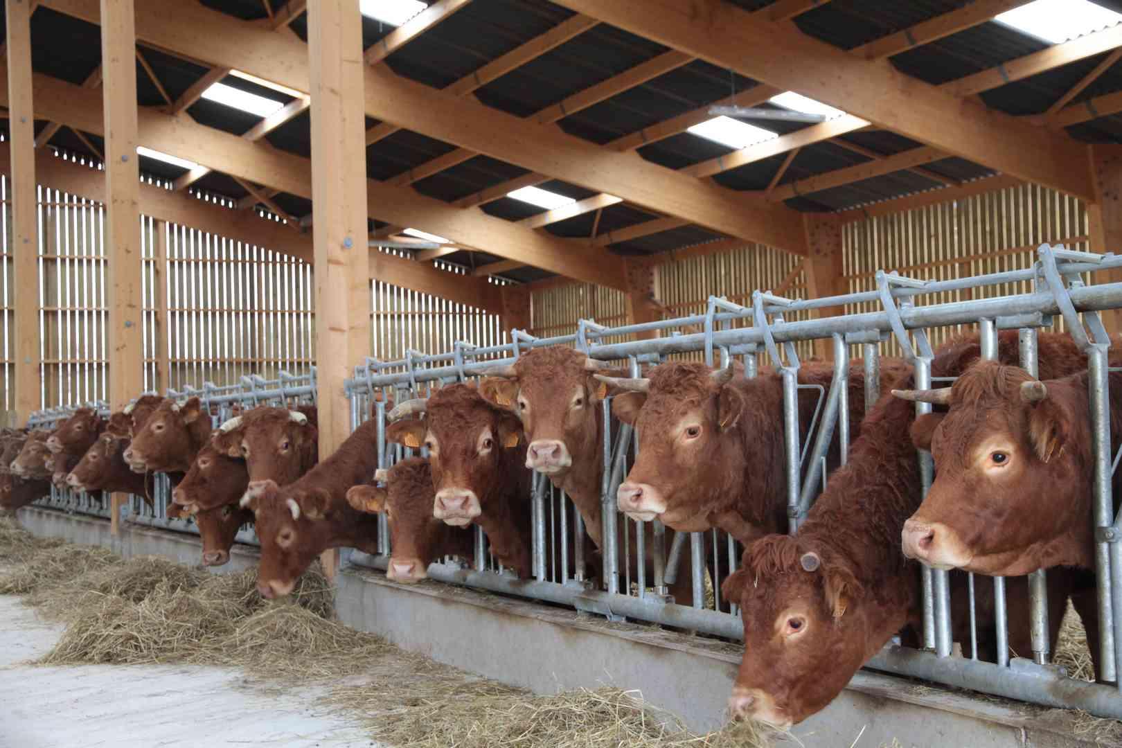 hangar bois lamelle colle vaches allaitantes
