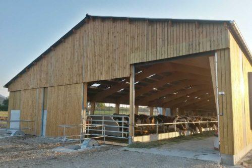 hangar vaches laitières