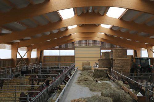 Stabulation chèvres dans l'Yonne