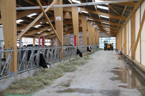 Stabulation vaches laitières en Lorraine