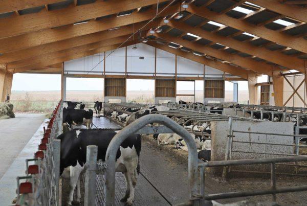 Stabulation vaches laitières en Alsace