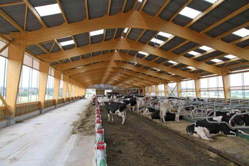 vaches laitières caillebotis filet brisevent